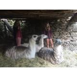 Lamas de la Montagne Noire